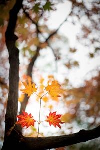 이 사진은 가을의 직접적 표현이다.