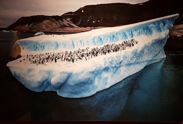 '붕괴되는 남극해빙'은 지구온난화로 인해 남극에서 떨어져 나온 얼음위에 펭귄 수백 마리가 함께 떠다니는 애처로움을 담았다.